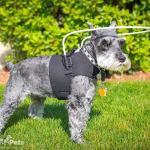Max using the Walkin' Blind Dog Halo