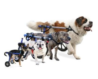 Walkin' Wheels Dog Wheelchairs