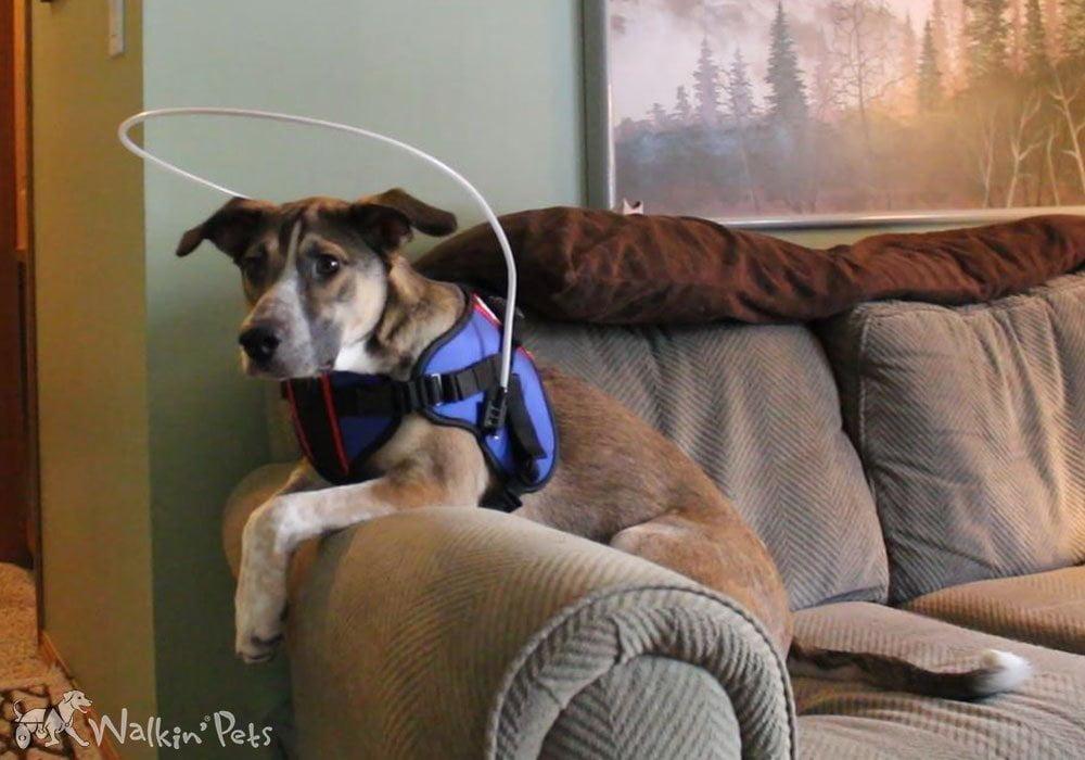 Blind Dog Harness Blind Dog Halo Dogs With Sards