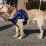 Blind Dog Halo Pride