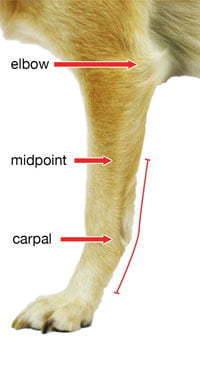 Walkin' Carpal Splint