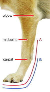Front Splint Measurements