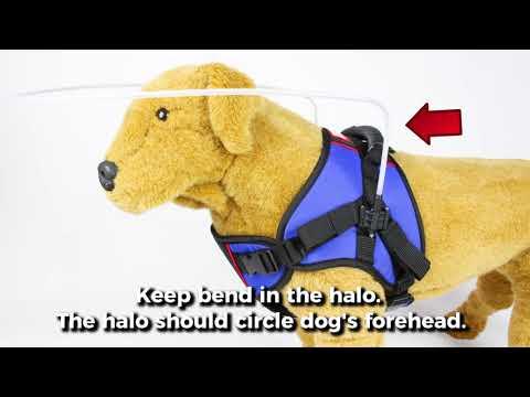 Walkin' Blind Dog Halo