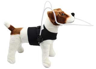 Walkin' Blind Dog Halo Modification