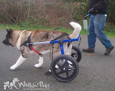 Walkin Wheels Large Dog Wheelchair For Handicapped Pets