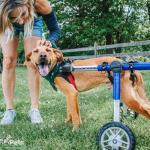 Walkin' Wheels MEDIUM Dog Wheelchair