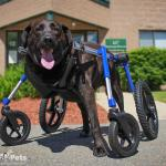 Bane in Large Full Support / Quad Wheelchair