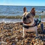 Flo In Small Walkin' Wheels Dog Wheelchair