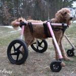 Gracie in Large Full Support / Quad Wheelchair