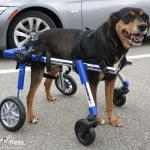 Guinness Quad Wheelchair