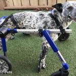 Jill in Medium Full Support / Quad Walkin' Wheels Wheelchair