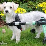 Piper in Seafoam Wheelchair