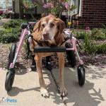 Sidney in Large Full Support / Quad Wheelchair