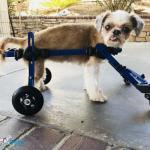 Sloat in Mini Wheelchair