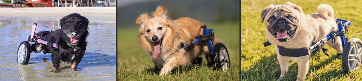 Dog Wheelchairs for Dachshunds & Other Small Dogs