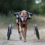 Birgit Ober from Hunderolli in Large Wheelchair