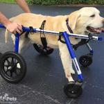Buddy in Large Full Support / Quad Wheelchair