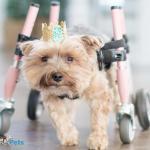 Carli in Small Full Support/Quad Walkin' Wheels Wheelchair