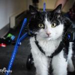 Cat in Mini Wheelchair