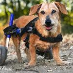 Charlie in Small Wheelchair