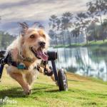 Chester in Walkin' Wheels Medium