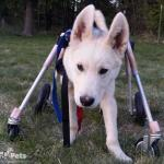 Heaths Medium Full Support / Quad Wheelchair