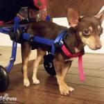 Henry in Mini Walkin' Wheels Wheelchair