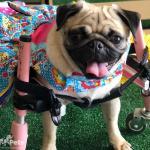 Jadinhaalgc in Small Full Support/Quad Walkin' Wheels Wheelchair