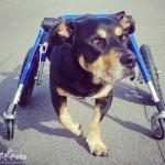 Johann in Medium Full Support / Quad Wheelchairs