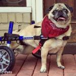 Kita In Small Walkin' Wheels Wheelchair