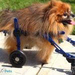 Koko Dog Wheelchair Mini