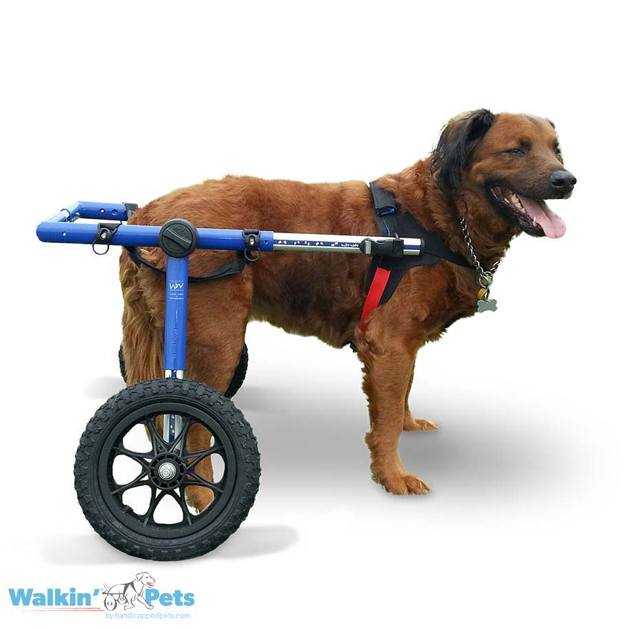 Walkin' Wheels Large Dog Wheelchair for ...