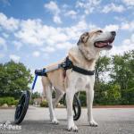 Walkin' Wheels Large Wheelchair