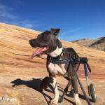 Lou Hiking in Medium Wheelchair