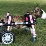 Lyla in Small Full Support/Quad Walkin' Wheels Wheelchair