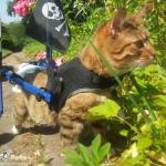 Meatball in Mini Walkin' Wheels Wheelchair