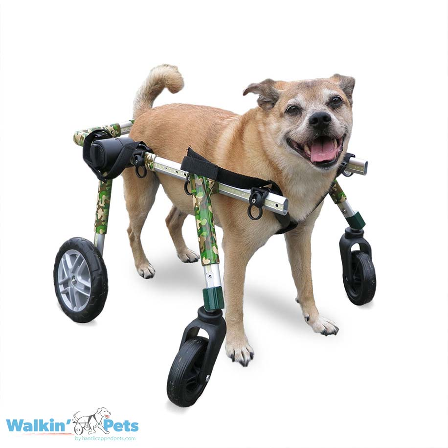 Full Support Medium Dog Wheelchairs ...