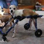 Mini Dog Wheelchair