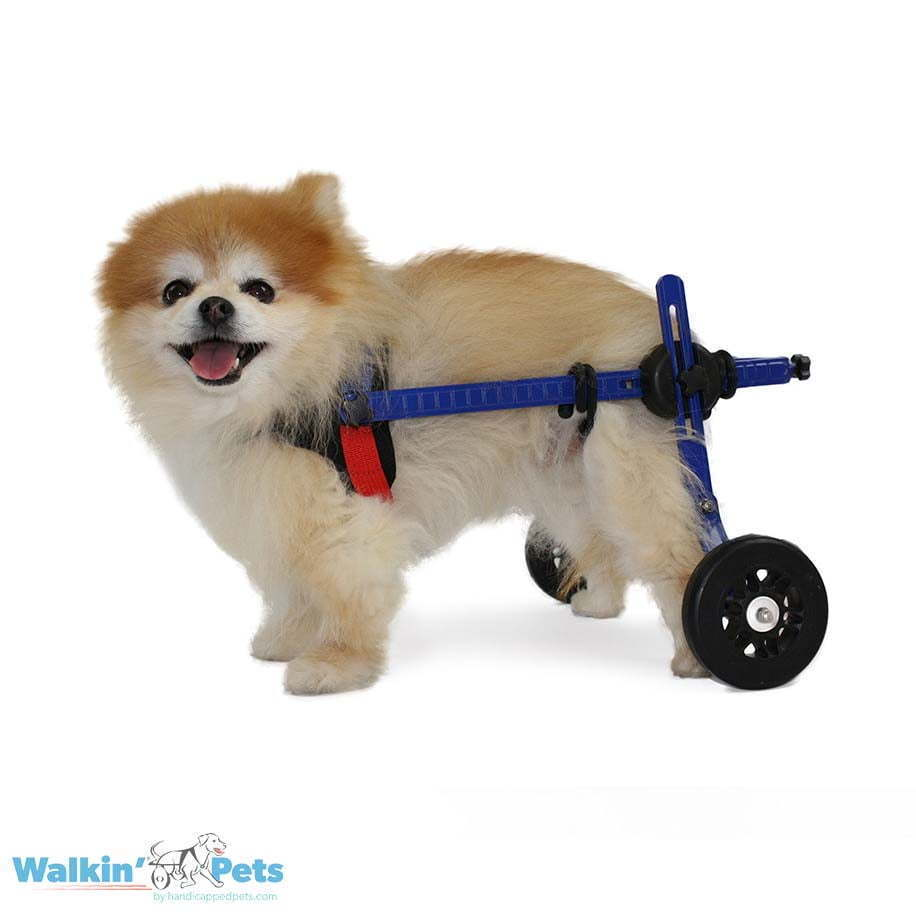 Dog Wheelchair for Toy Breeds   Cat ...