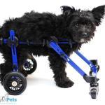 Moe in Walkin' Wheels Mini Wheelchair