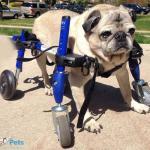 Obie in Small Full Support/Quad Walkin' Wheels Wheelchair
