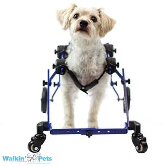 Piper in Walkin' Wheels Full Support/4-Wheel MINI