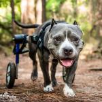 Rocky in Walkin' Wheels Medium Rear Wheelchair
