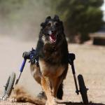 Skylar in Large Wheelchair