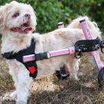 Small Dog Wheelchair