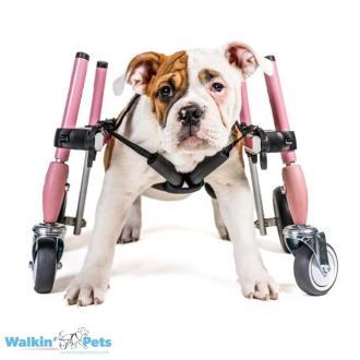 Walkin' Wheels SMALL Front Wheel Attachment