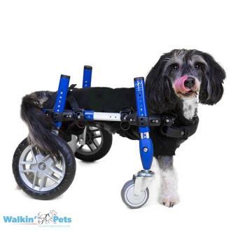 Walkin' Wheels Full Support/4-Wheel SMALL