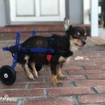 Mini Walkin' Wheels Wheelchair