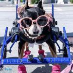 Sophieminpin in Mini Wheelchair