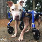 Tivi in Medium Full Support / Quad Wheelchair